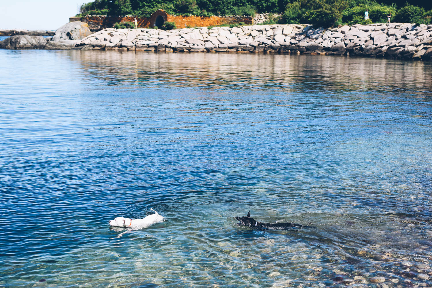Dogs swimming at the Cliff Walk in Newport, RI
