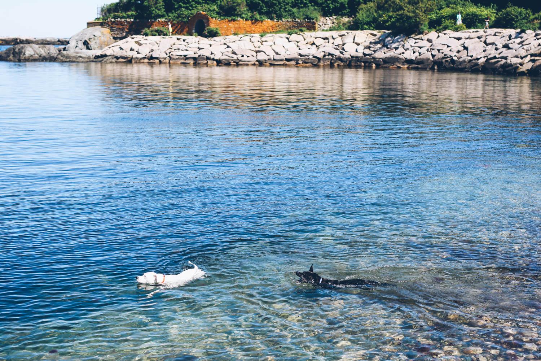 Dogs swimming at the Cliff Walk in Newport, RI