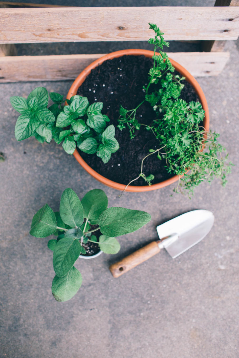 5 TIPS TO KEEP HERBS ALIVE
