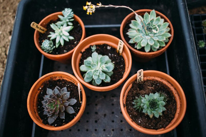 How to Grow Succulents from Leaves and Clippings
