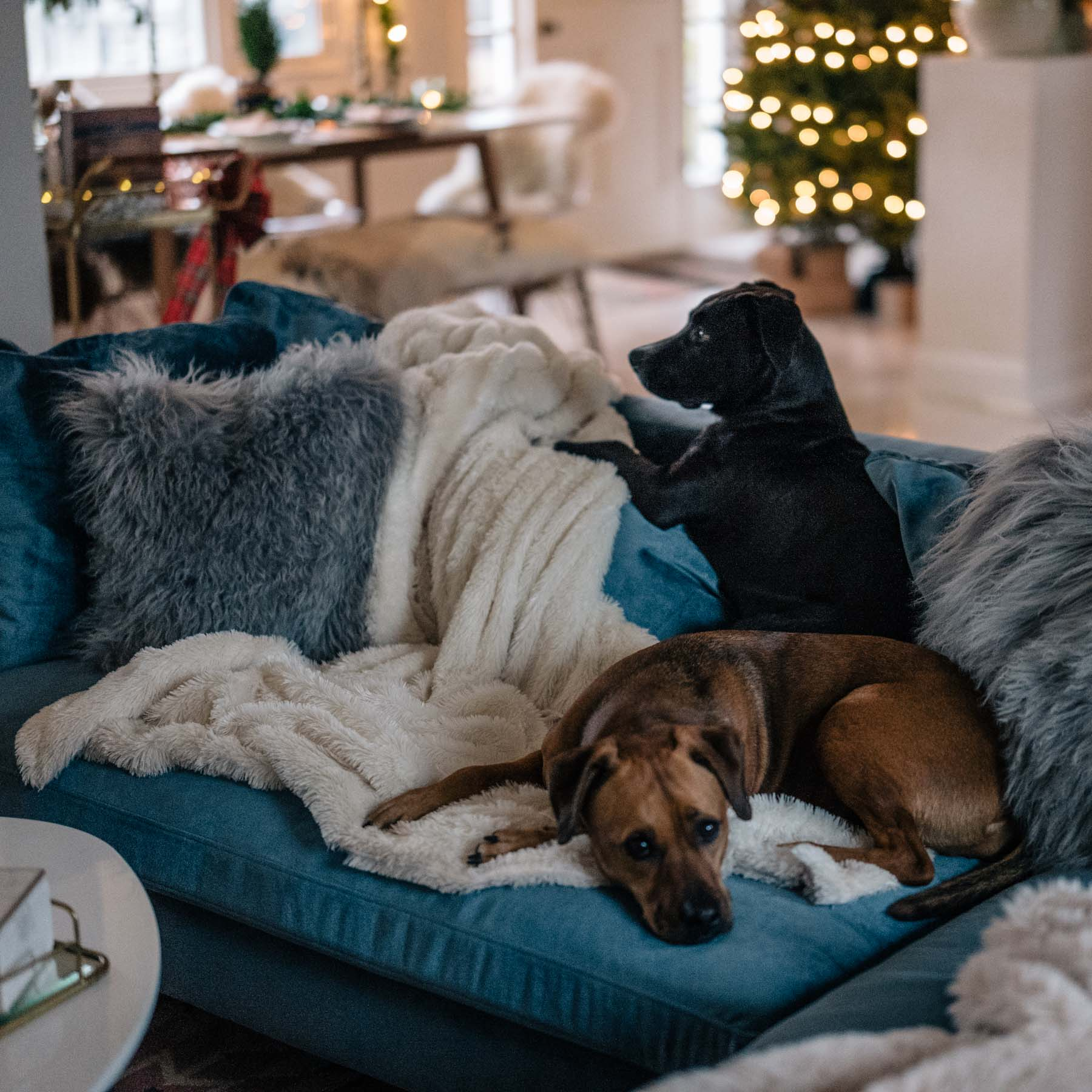 Jess Ann Kirby relaxes at home with her two puppies and favorite Anthropologie throw