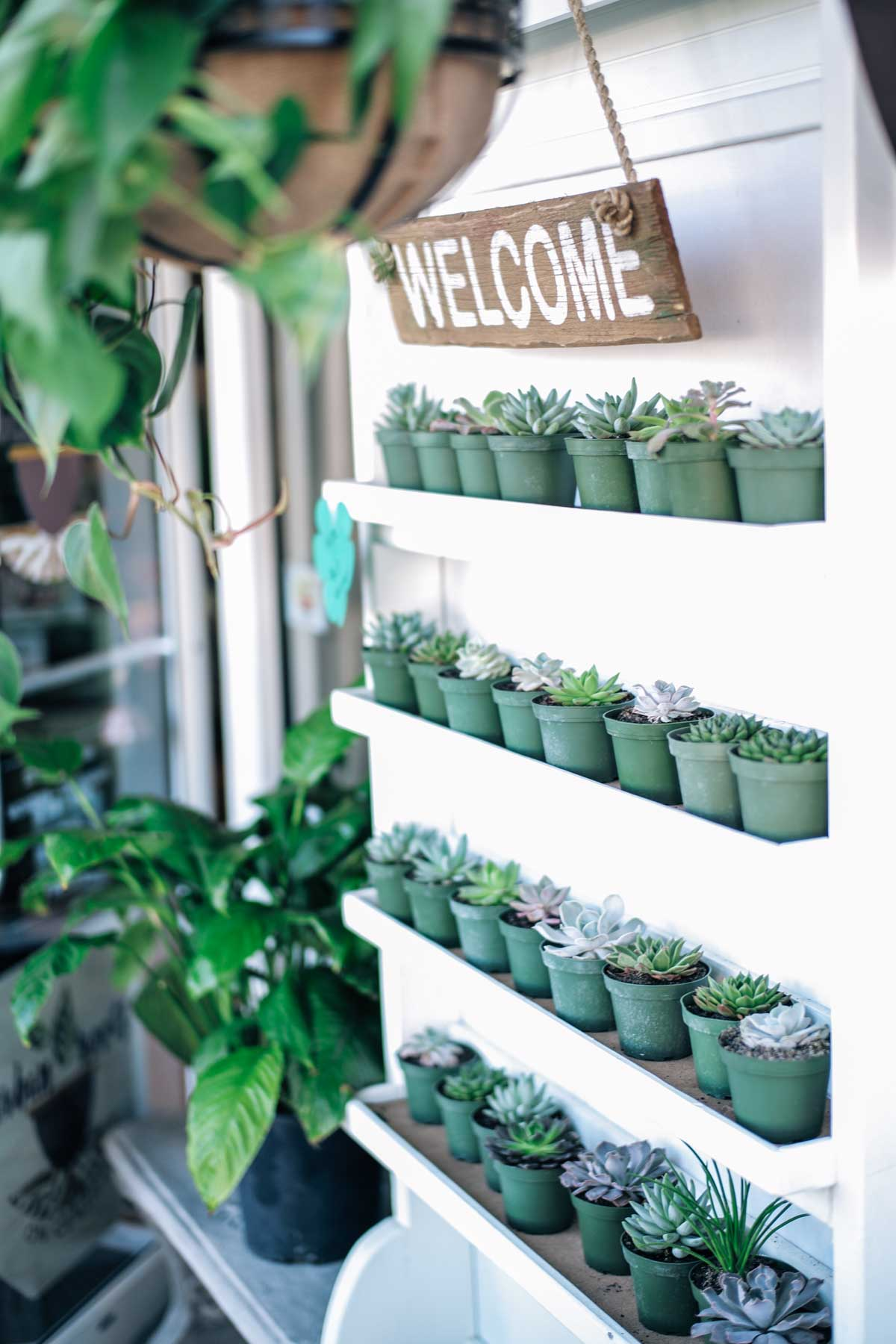 Jess Ann Kirby visits a plant shop on Central Ave in Saint Petersburg, Florida