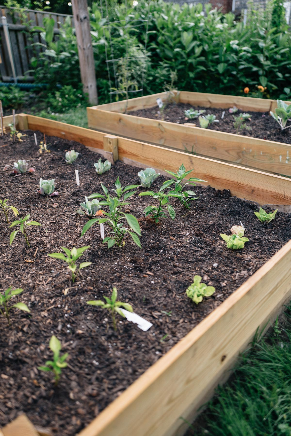 Jess Ann Kirby planted a garden in two raised beds in her back yard to grow her own produce and to lessen her environmental impact